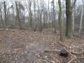 2014-03-18-langes-luch-baumfaellungen-092