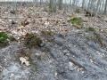 2014-03-18-langes-luch-baumfaellungen-099