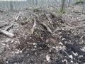 2014-03-18-langes-luch-baumfaellungen-103