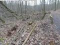 2014-03-18-langes-luch-baumfaellungen-113