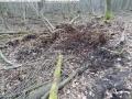 2014-03-18-langes-luch-baumfaellungen-114