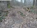 2014-03-18-langes-luch-baumfaellungen-118