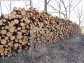 WaldPflege: Pichelsberge/AmPostfenn - Baumfällungen März 2014