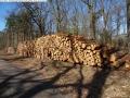 2014-03-20-pichelsberge-ampostfenn-103