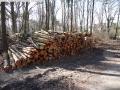 2014-03-20-pichelsberge-ampostfenn-142