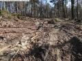 2014-03-20-pichelsberge-ampostfenn-002