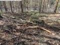 2014-03-20-pichelsberge-ampostfenn-009