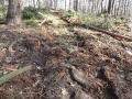 2014-03-20-pichelsberge-ampostfenn-011