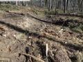 2014-03-20-pichelsberge-ampostfenn-021
