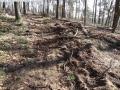 2014-03-20-pichelsberge-ampostfenn-035