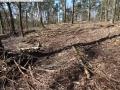 2014-03-20-pichelsberge-ampostfenn-050