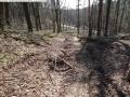 2014-03-20-pichelsberge-ampostfenn-054