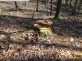 2014-03-20-pichelsberge-ampostfenn-059