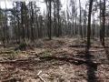 2014-03-20-pichelsberge-ampostfenn-064
