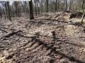 2014-03-20-pichelsberge-ampostfenn-118