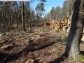 2014-03-20-pichelsberge-ampostfenn-120