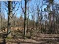 2014-03-20-pichelsberge-ampostfenn-144