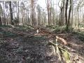 2014-03-20-pichelsberge-ampostfenn-149