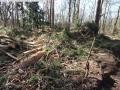 2014-03-20-pichelsberge-ampostfenn-154
