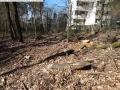 2014-03-20-pichelsberge-ampostfenn-161