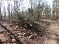 2014-03-20-pichelsberge-ampostfenn-165