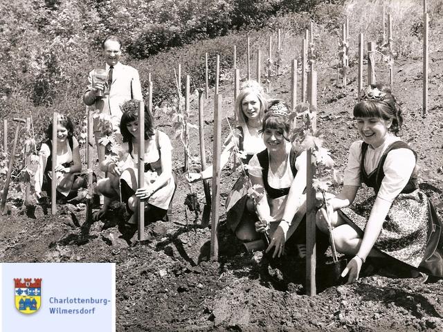 Rebanpflanzung am Teufelsberg am 19.6.1970 mit Bezirksstadtrat Hans-Joachim Schwarze und Weinköniginnen, Foto: Zellmann